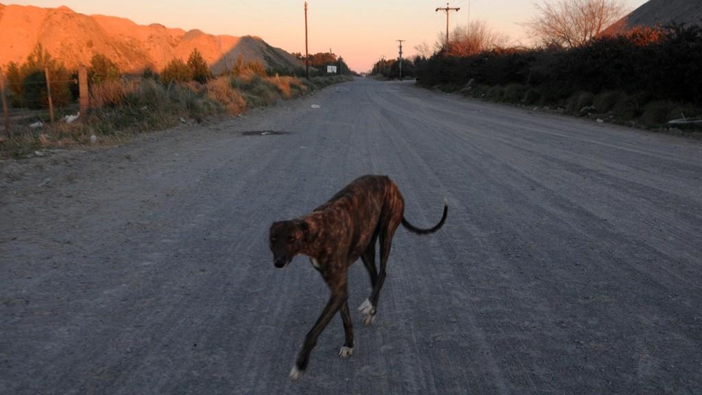 Camino al campo de Francisco Aguilar.
