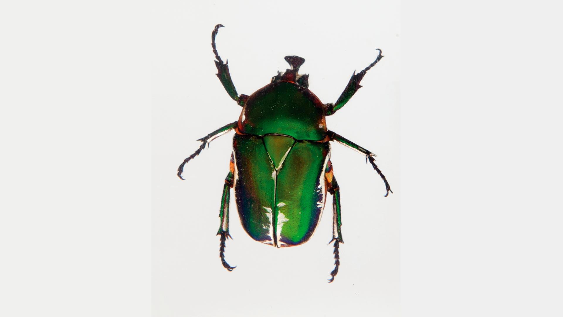 Escarabajos_Carrera003_CAJA