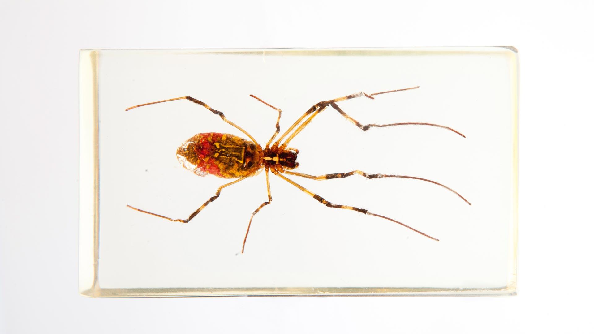 Escarabajos_Carrera005_CAJA