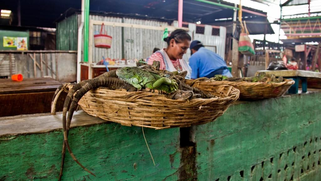MercadoManaguaGAL_Zanotti001