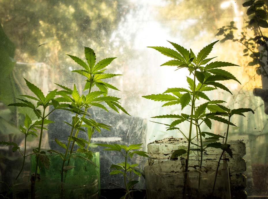 expocannabis_7_izq