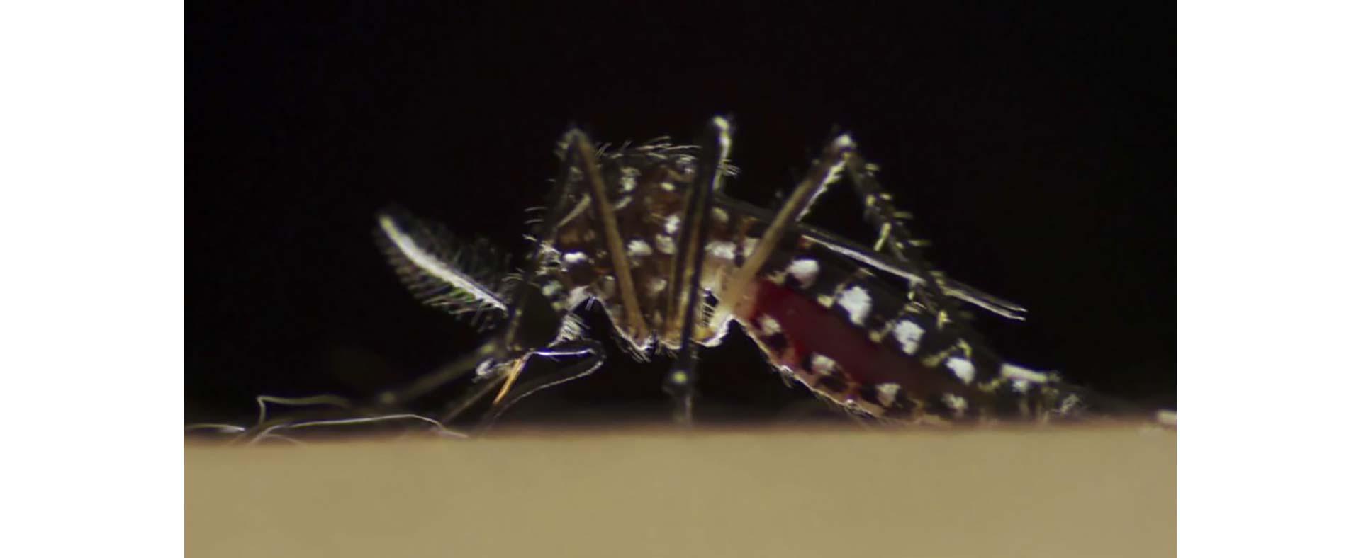 Dengue_Zika_2_caja