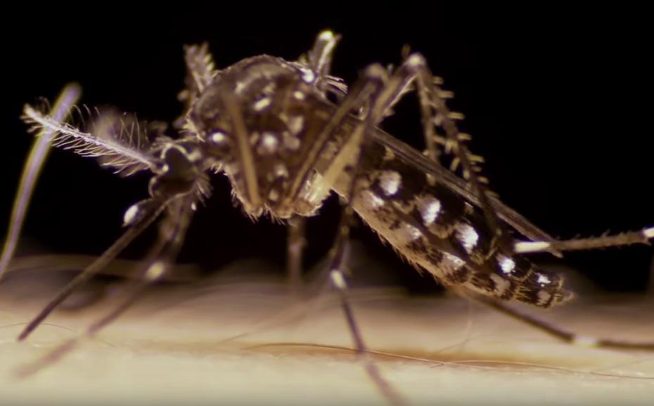 dengue_argentina_1_der