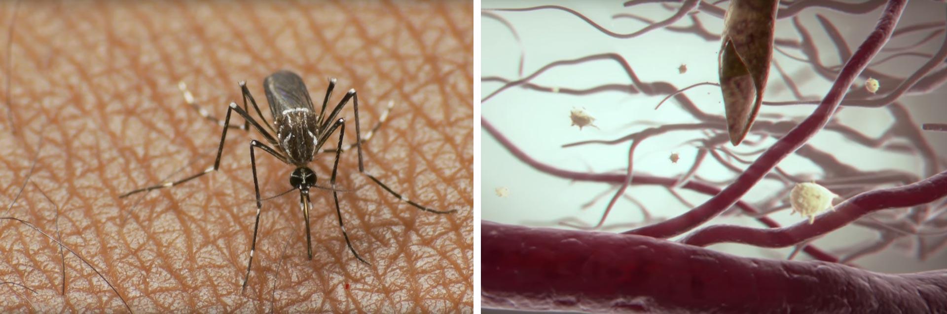 dengue_argentina_2_caja