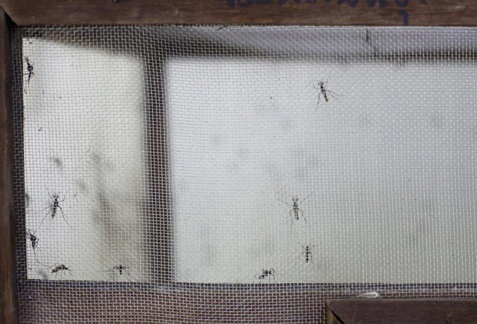 dengue_argentina_5_izq