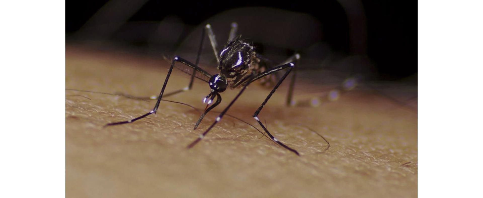 dengue_argentina_7_caja