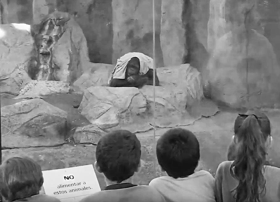 Sandra nació en el zoológico de Rostock, Alemania. En septiembre de 1995, a los nueve años de edad, fue trasladada al Zoo de Buenos Aires.