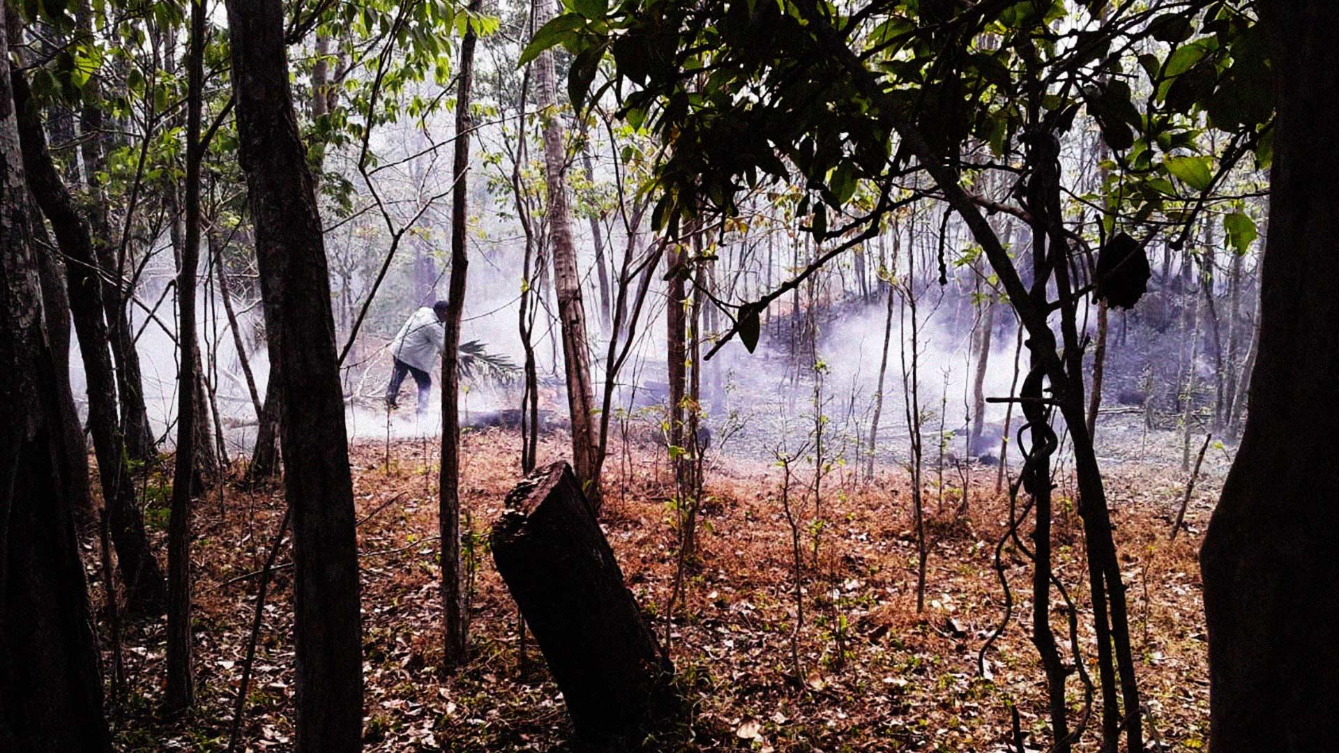 Amazonia-boliviana_01port