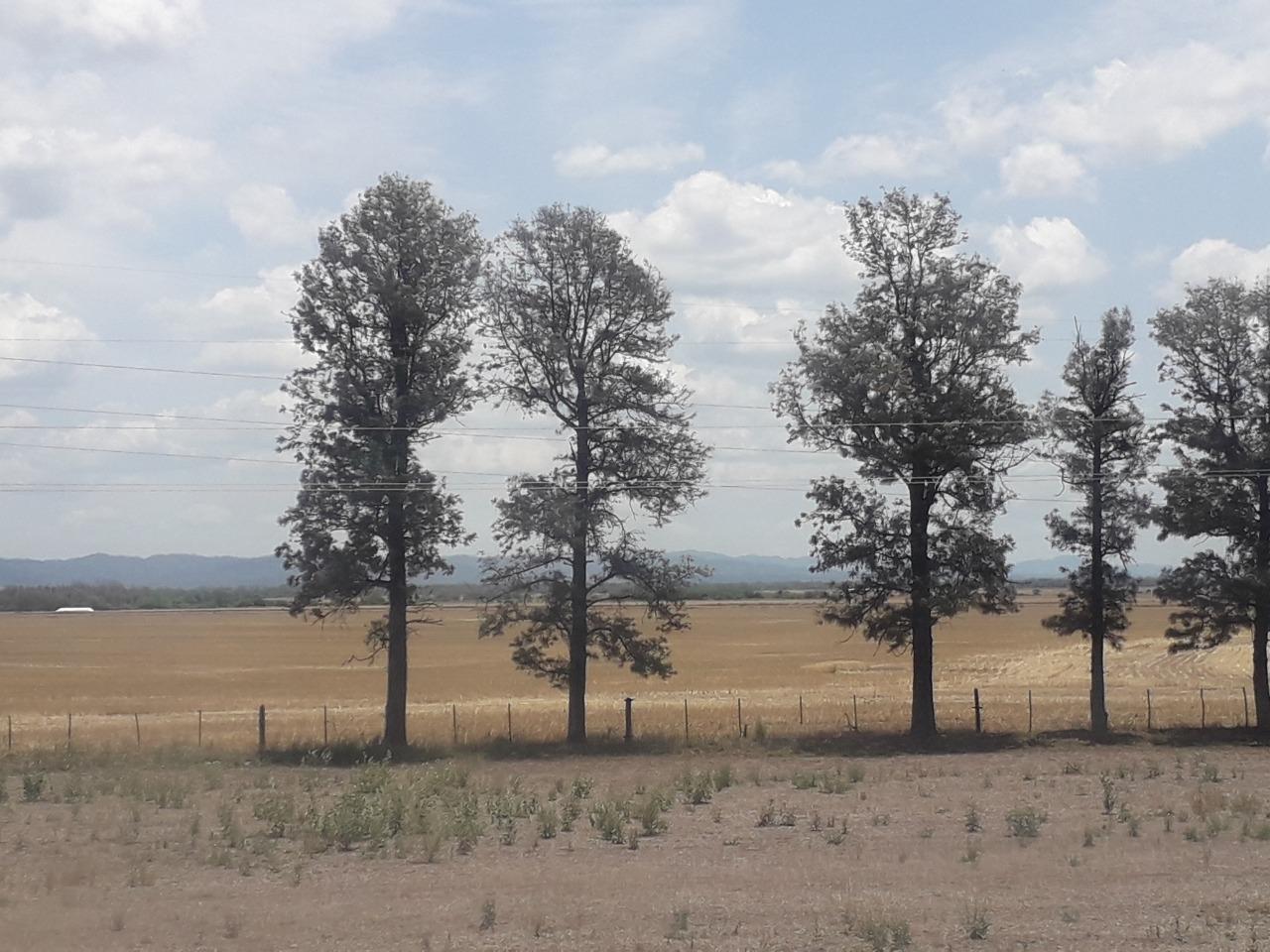 Foto desmontes para cultivos -Foto M Schmidt - CONICET-FSOC