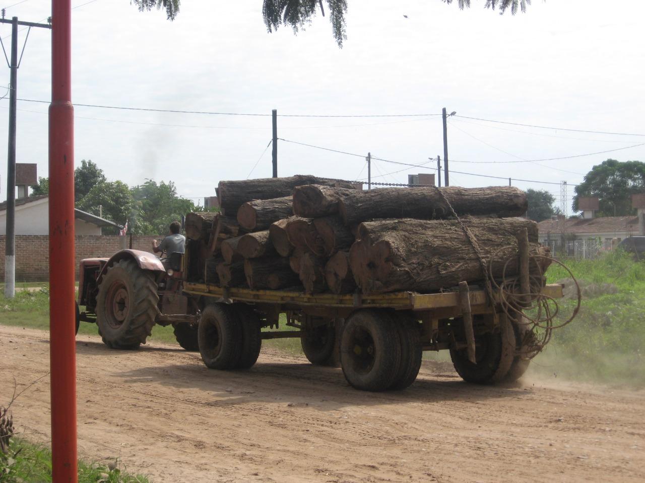 Foto troncos cortados - M Schmidt - CONICET-FSOC